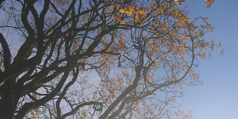 Zdravilna energija dreves - Healing Energy of the Trees