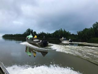 Trip Report: Papuan Coast Sept. 8 - 14, 2017