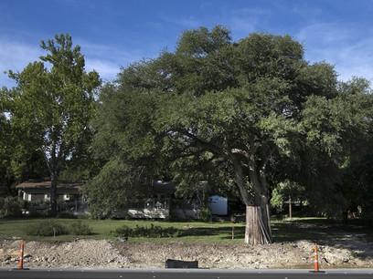 Texas House votes again to move forward on tree bill Abbott vetoed