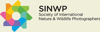SINWP logo for web page .jpg