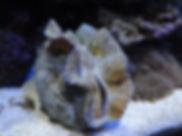 Saltwater clam Austin, Tx