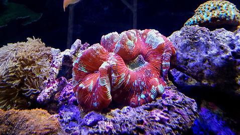 Saltwater coral Austin, Tx