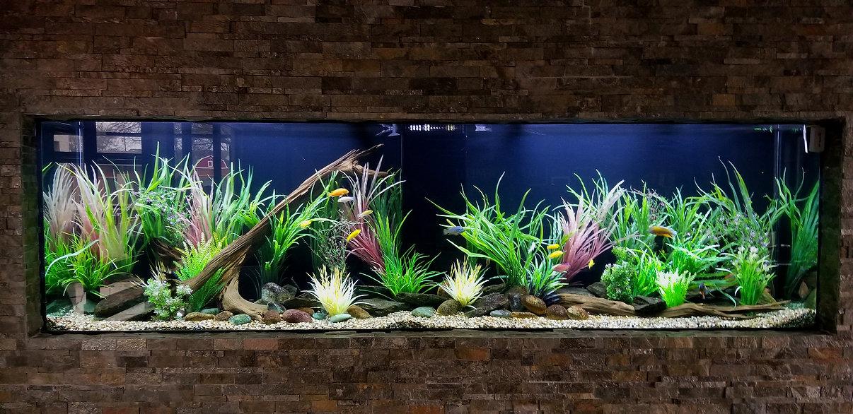 Freshwater cichlid aquarium Dallas, Tx