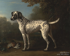 -_A_Grey_Spotted_Hound_-_Go