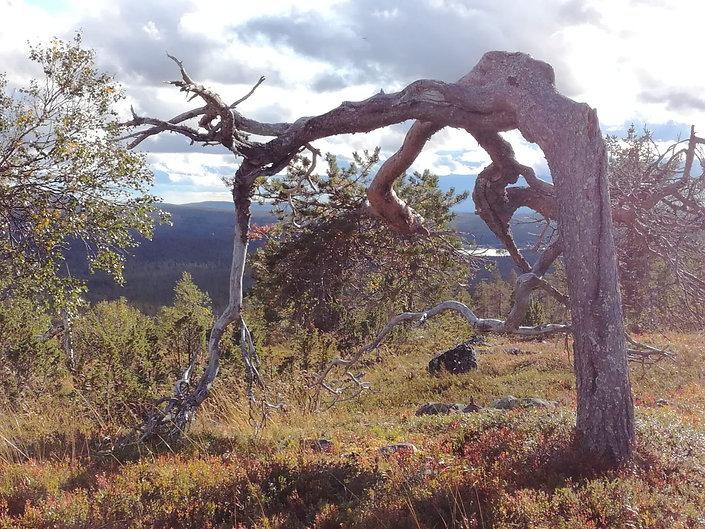 Natur Positiv Pyskologi.jpg