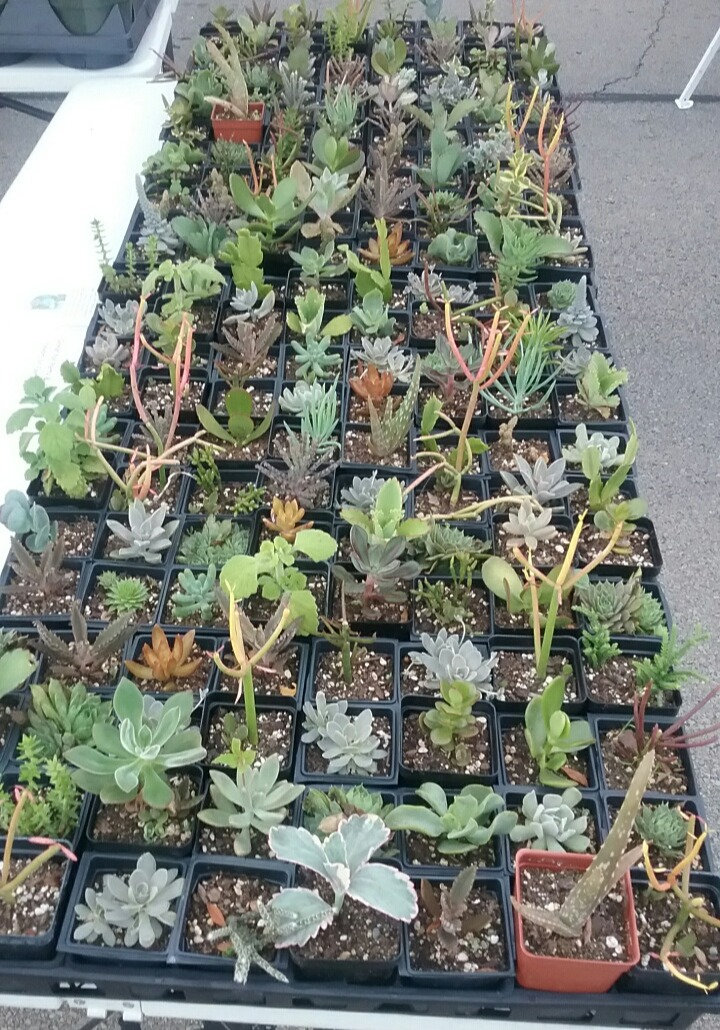 2%24succulentsFM_edited.jpg