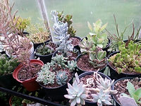 succulents4.jpg