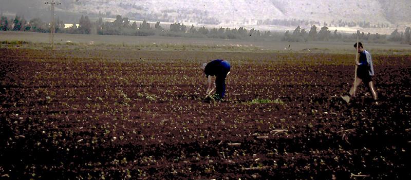 Kibbutz HaSolelim, Fields