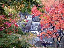 Cascade relaxante bordée de plantes méditaton