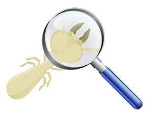 Diagnostic termites capricornes vrillettes