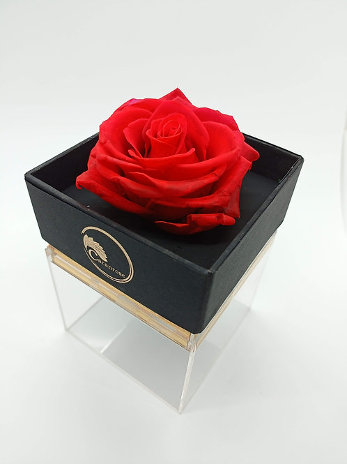 Long Lasting Rose with fragrance-Square box-shelf life more than 1 year