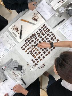 cacaograder3.jpg
