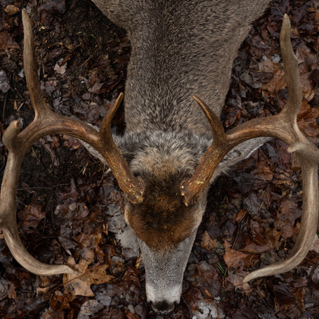 UNDERSTANDING TERRAIN AND VEGETATION FEATURES FOR HUNTING BIG WOODS MOUNTAIN BUCKS