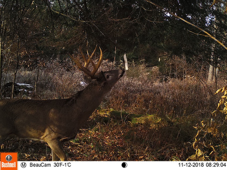 5 NEW GEAR CHOICES FOR HUNTING WHITETAILS