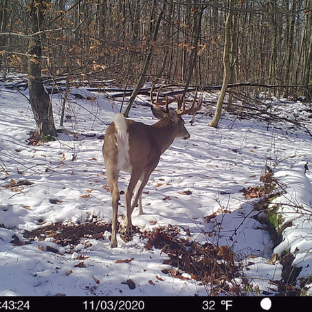 ANALYZING TRAIL CAMERA AND OBSERVATION DATA: OFF-SEASON MOUNTAIN BUCKS