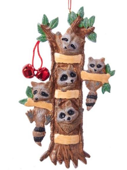 raccoon family 5
