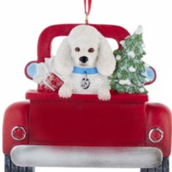 dog in red truck white poodle