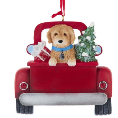 dog in red truck labradoodle