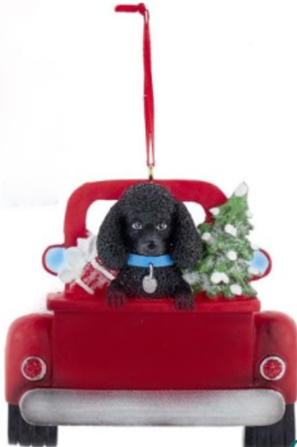dog in red truck black poodle