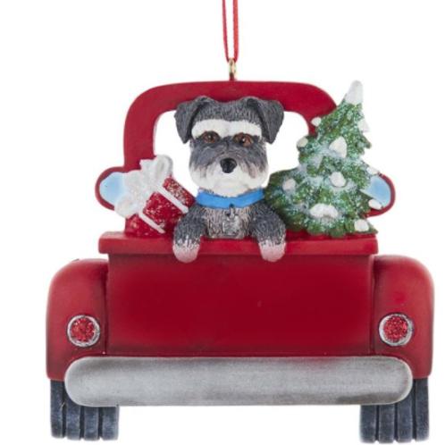 dog in red truck schnauzer