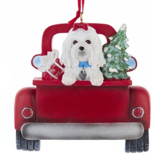 dog in red truck maltese