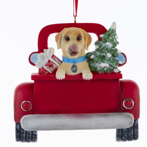 dog in red truck yellow lab