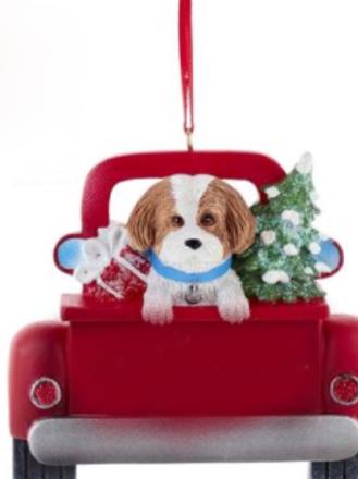 dog in red truck brown shih-tzu