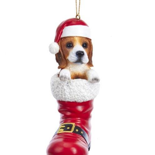 dog in boot beagle