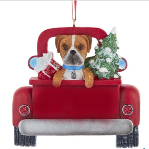 dog in red truck boxer
