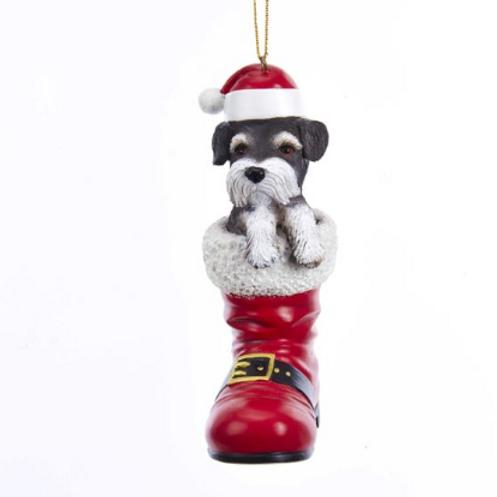 dog in boot schnauzer