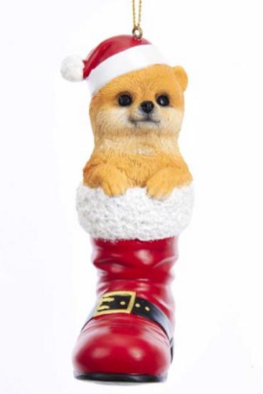 dog in boot pomeranian