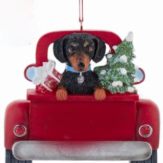 dog in red truck black and tan dachshund