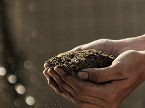 Veganism: Does your food choice impact iodine intake?