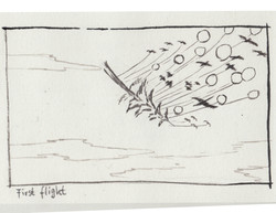 sketch_first_flight
