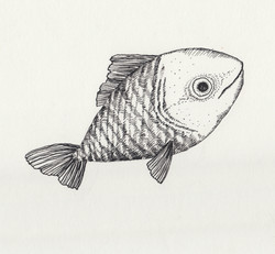 fishes3