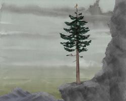pine_on_mountain_3