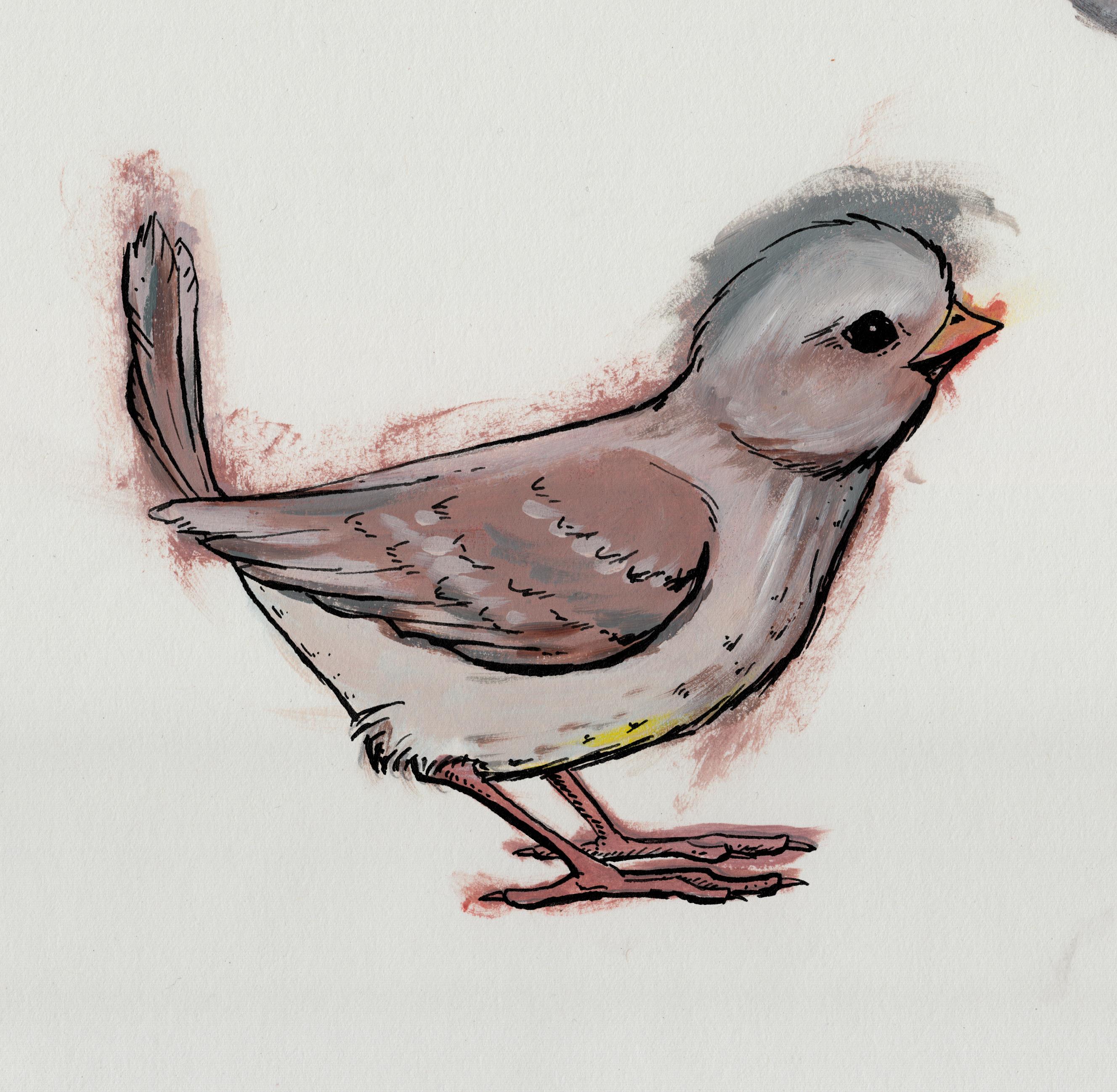 bird_col_3