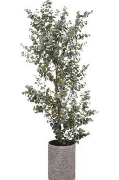 Eucalyptus Tree in Cement Pot 8'