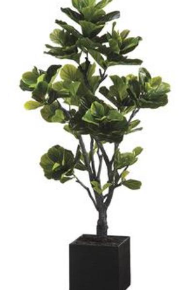 EVA Fiddle Tree in Basket 6'