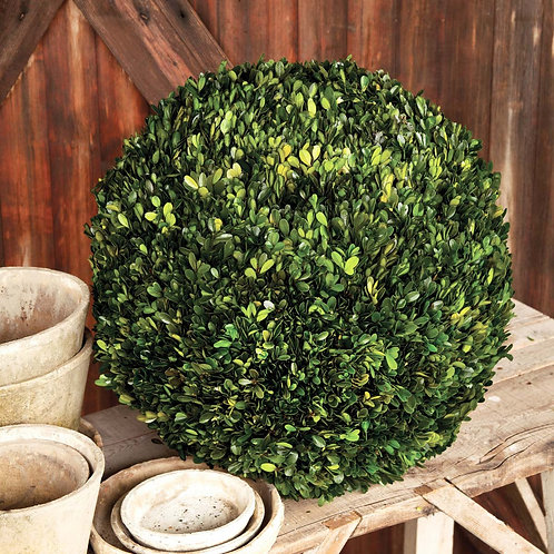 Preserved Boxwood Ball, 21""