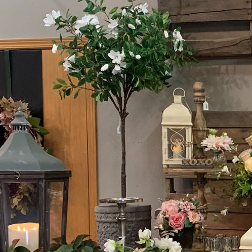"Azalea Plant in Planter 53"""