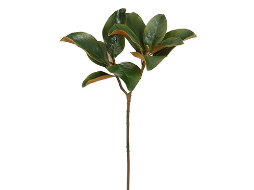 "Magnolia Leaf 25"""