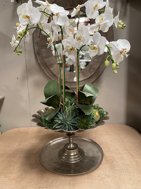"Phalaenopsis Orchid/Succulent in Footed Bowl 39""H"