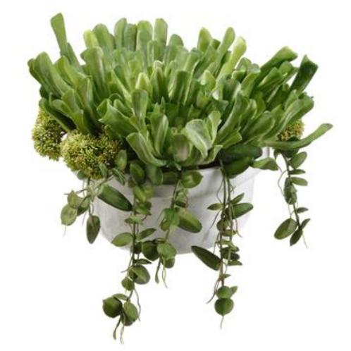"Echeveria/Sedum in Terra Cotta Pot 11"""