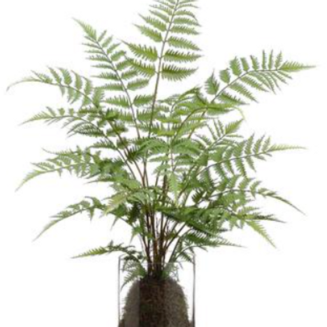 Forest Fern in Glass Vase 30""