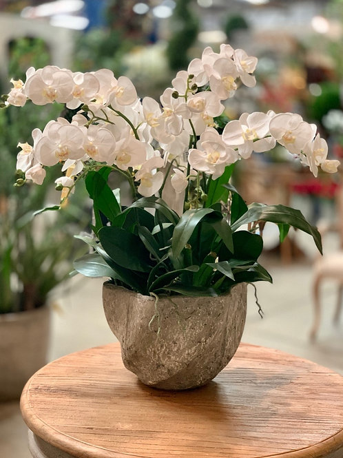 """Phalaenopsis Orchid in Star Pot White 30""""H"""