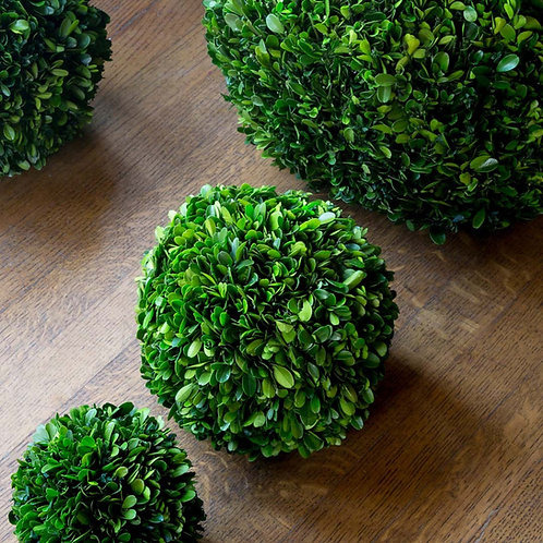 Preserved Boxwood Ball, 8""