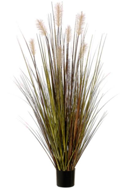 PAMPAS GRASSIN POT 60'