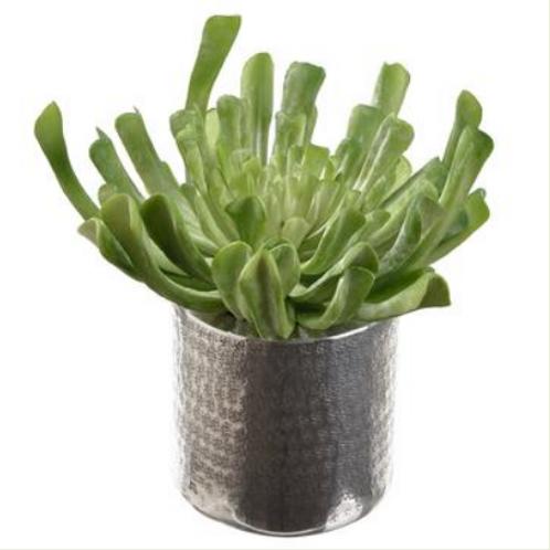 """Echeveria in Planter 10.5"""""""