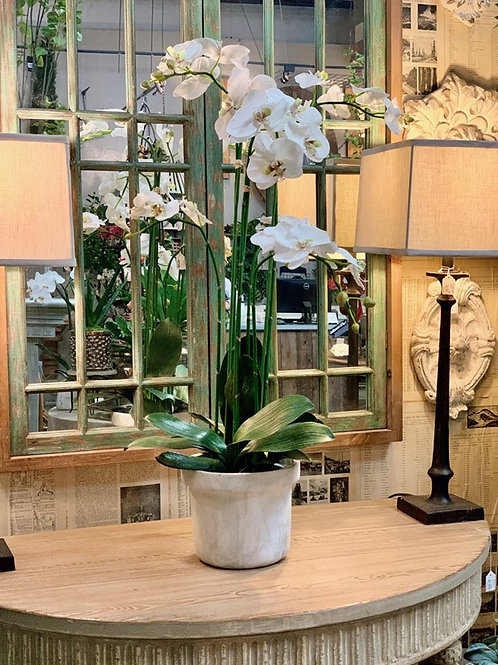 """Phalaenopsis Orchid Plant in Terra Cotta Pot 39""""H"""